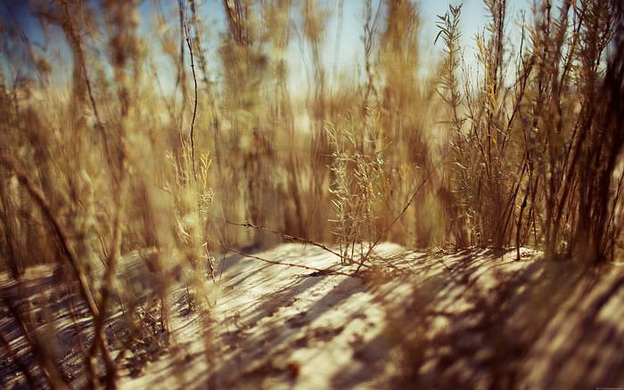 Desert_grass_desktopsmaller