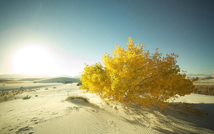 Golden_tree_dekstopsmaller